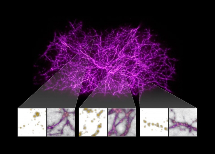 Astronomers Use Slime Mould to Map the Universe's Largest Structures