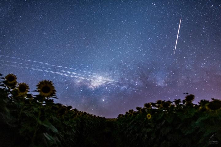Starlink and the Astronomers
