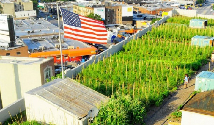 New York's Rooftop Farms Orovide Fresh Local Produce - and Help Stop a Sewage Problem