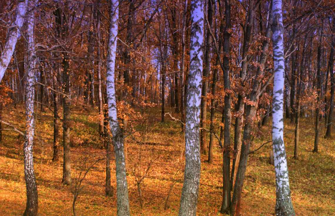 Russia, autumn forest