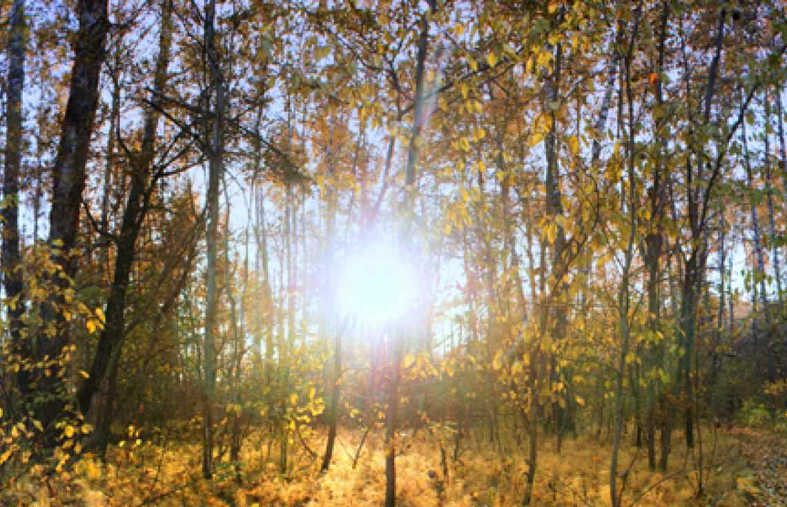 Russia, autumnal forest