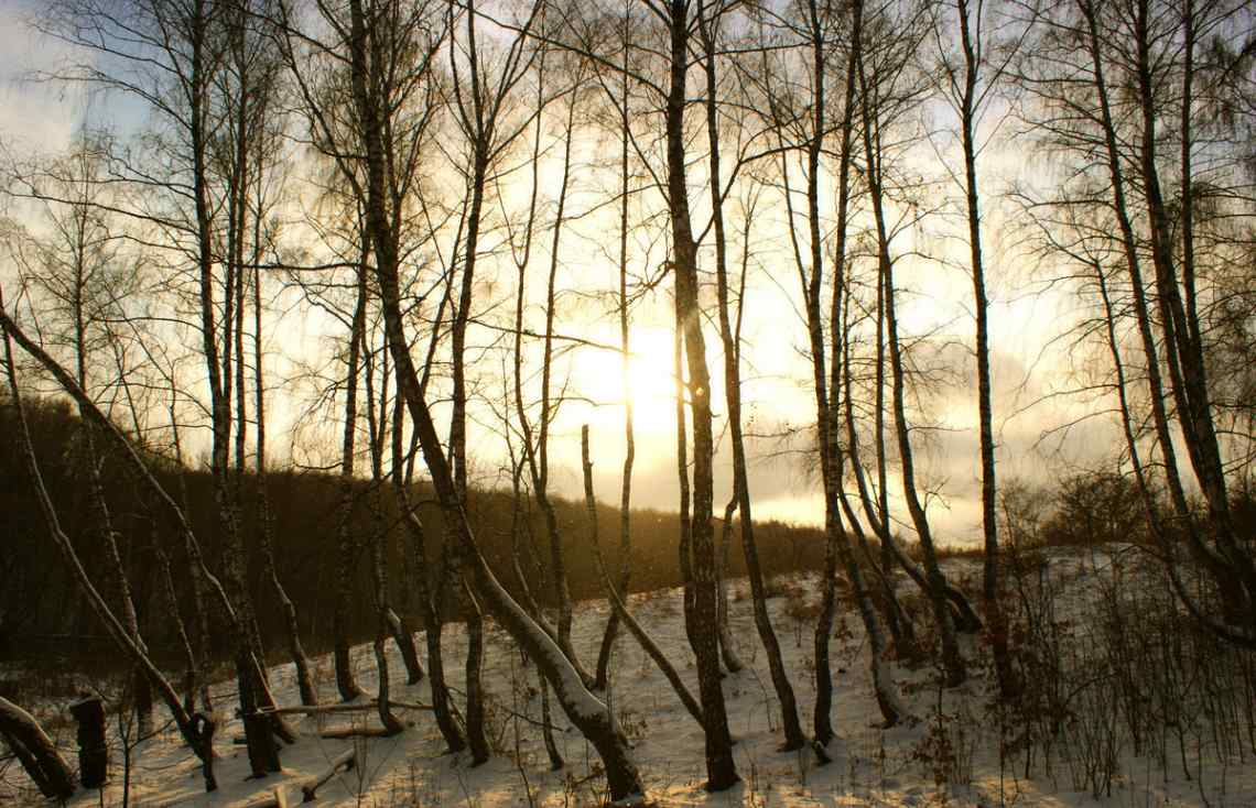 Russia, winter forest, snow