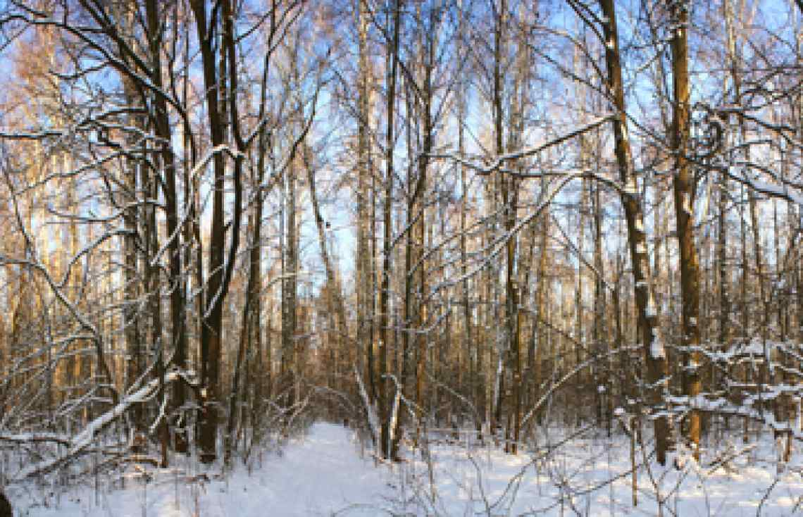 Russia, winter forest