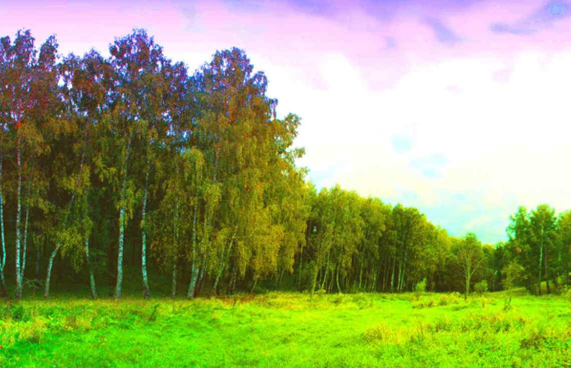 Russian forest, summer